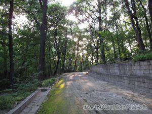 新璿源殿(シンソンウォンチョン)へ続く道