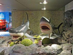出迎えてくれるサメ