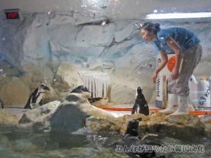 ペンギン3