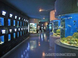 水族館の通路1