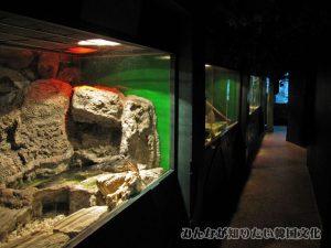 爬虫類エリアの通路2