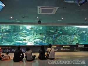 回遊魚水槽